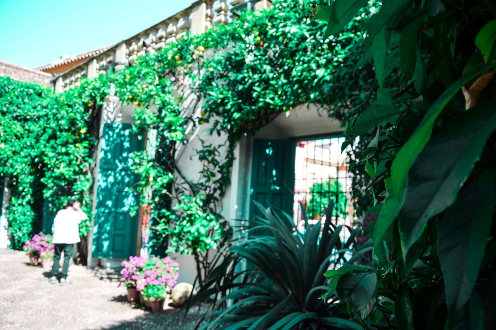 Foto de PALACIO DE VIANA Y SUS PATIOS